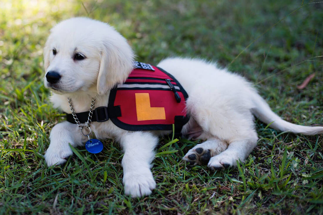Smart Pup in training