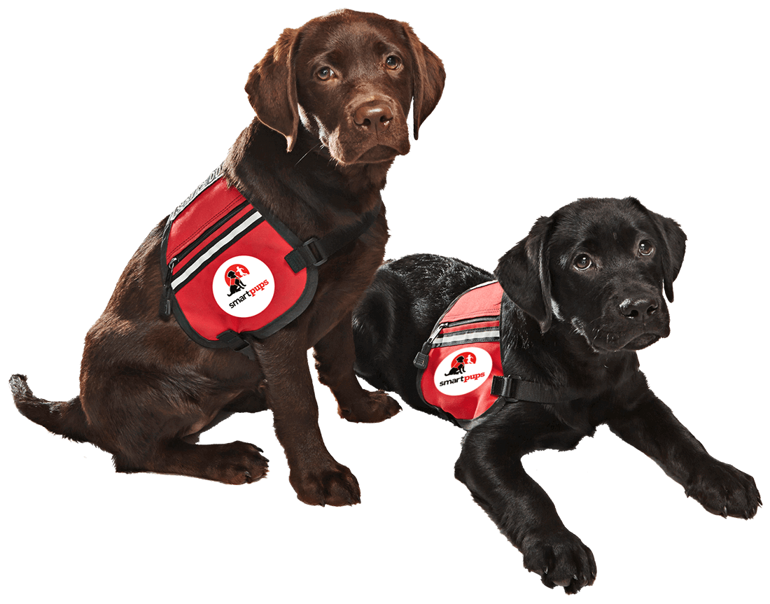 Smart pups assistance dogs