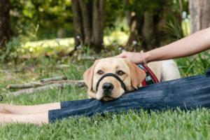 Assistance dog resting